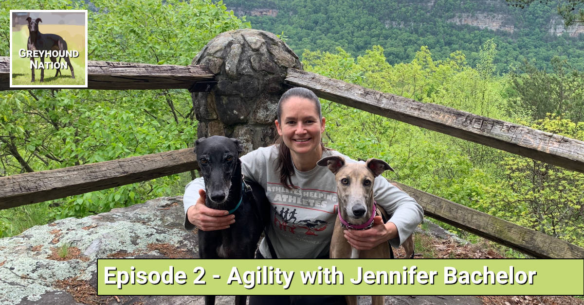 Greyhound Agility with Jennifer Bachelor