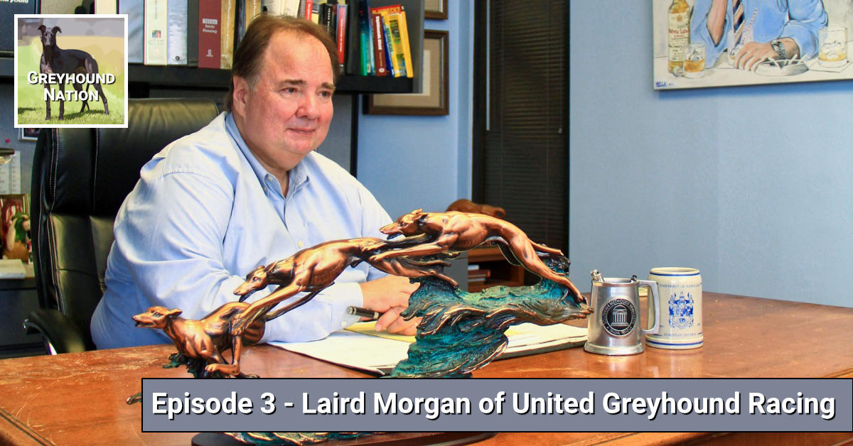 You are currently viewing Interview with Laird Morgan of United Greyhound Racing