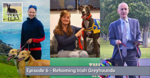 Rehoming Irish Greyhounds