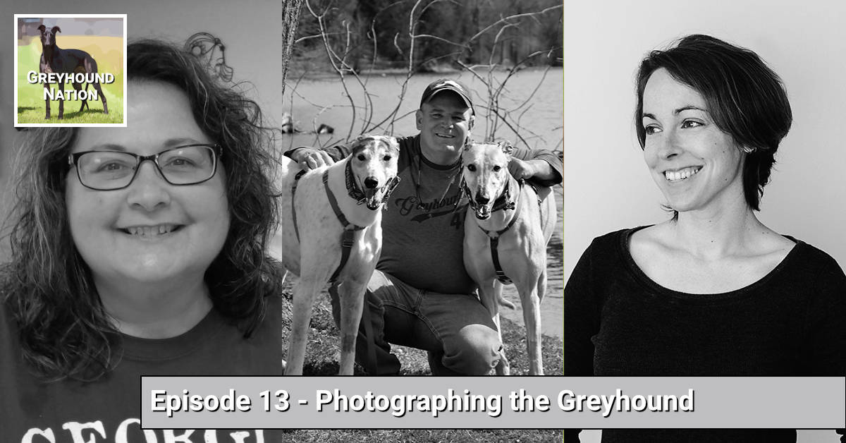 Photographing the Greyhound