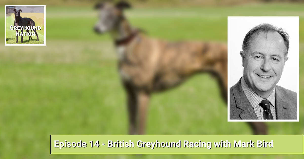 British Greyhound Racing with Mark Bird