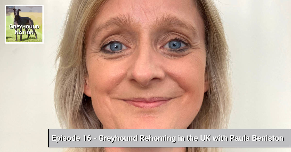 Greyhound Rehoming in the UK with Paula Beniston