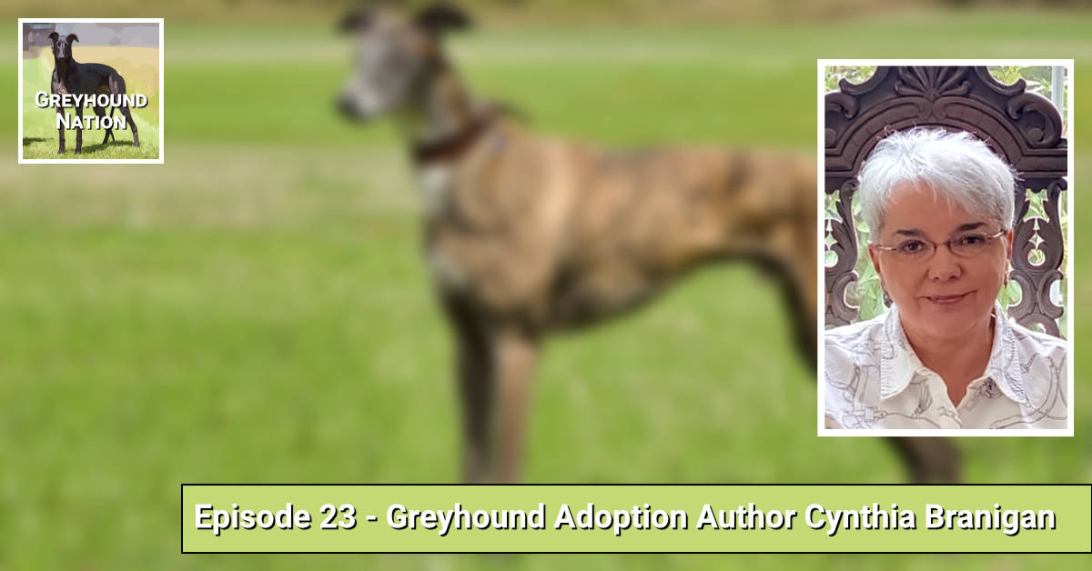 You are currently viewing Greyhound Adoption Author Cynthia Branigan